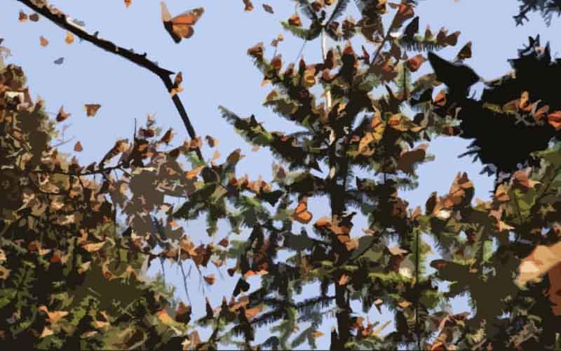 El efecto mariposa se cumple también en las acciones sociales